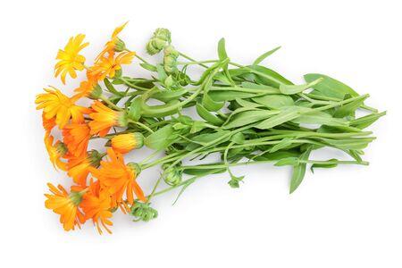 Bushes of orange Calendula flowers background . Isolated on white