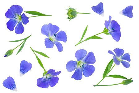 Flowers seed flax or Linum usitatissimum isolated on white background . Top view, flat lay