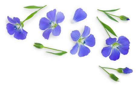 flax flowers or Linum usitatissimum on a white background with copy space for your text. Top view, flat lay
