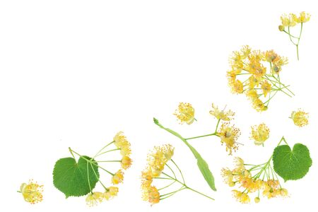 Linden flowers with leaf isolated on white background with copy space for your text, Top view. Flat lay.