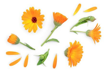 Calendula. Marigold flower with leaf isolated on white background. Top view. Flat lay pattern. Stok Fotoğraf