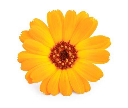 Calendula. Marigold flower isolated on white background Stock Photo
