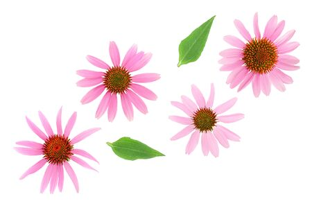 Coneflower or Echinacea purpurea isolated on white background, Top view. Flat lay. 免版税图像