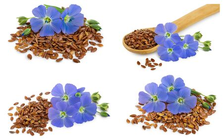 Set or collection flax blue flowers closeup isolated on white background.