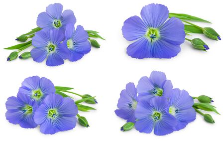Set or collection flax blue flowers closeup isolated on white background