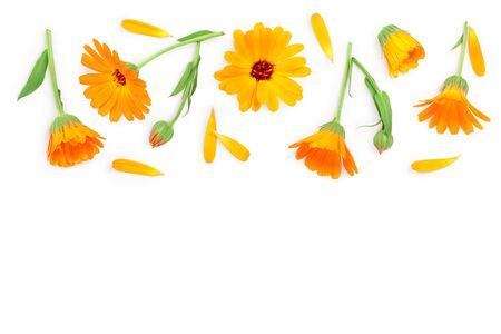 Calendula. Marigold flower with leaf isolated on white background with copy space for your text. Top view. Flat lay pattern