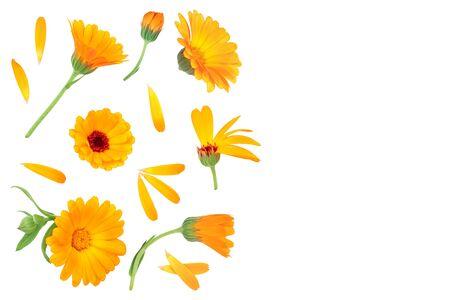 Ringelblume. Ringelblume mit Blatt isoliert auf weißem Hintergrund mit Kopienraum für Ihren Text. Ansicht von oben. Flaches Lagenmuster