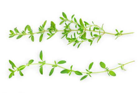 Fresh thyme spice isolated on white background. Top view. Flat lay