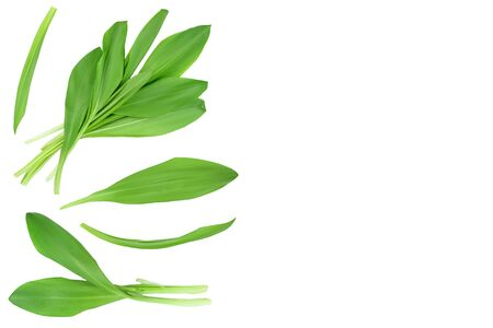 Ramson leaves isolated on white background