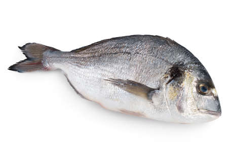 Fish dorado isolated on white background Reklamní fotografie