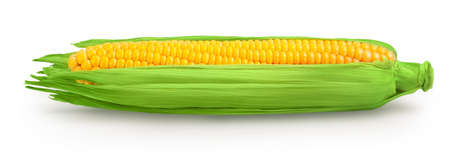 ear of corn isolated on a white background.