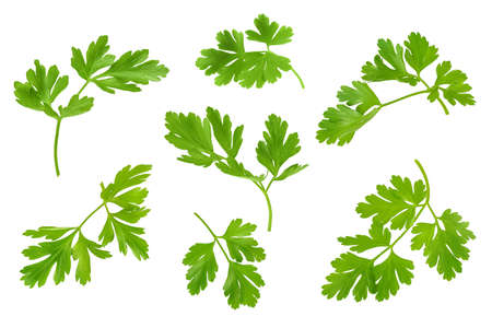 Parsley leaves isolated on white background with clipping path and full depth of field. Top view. Flat lay.