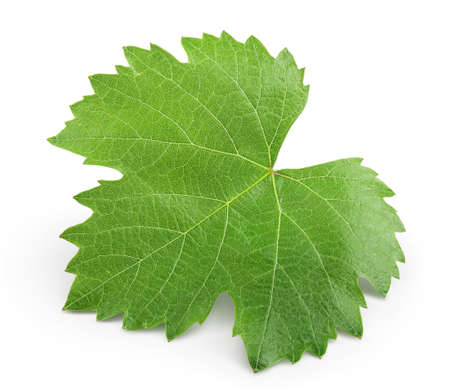 Grape leaf isolated on white background with clipping path and full depth of field. Top view. Flat lay