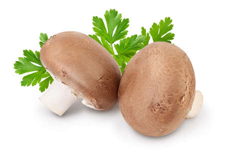 Royal Brown champignon isolated on white background with clipping path and full depth of field
