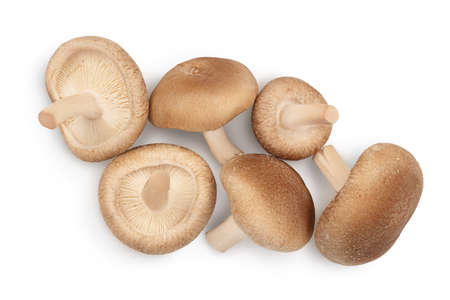 Fresh Shiitake mushroom isolated on white background with clipping path. Top view. Flat lay Standard-Bild