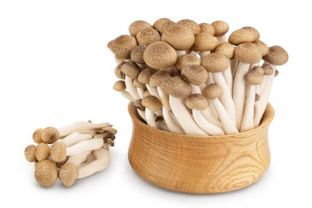 Brown beech mushrooms or Shimeji mushroom in wooden bowl isolated on white background with clipping path and full depth of field.