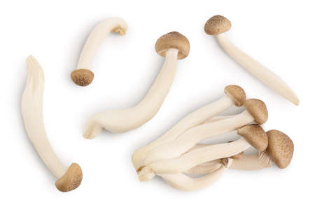 Brown beech mushrooms or Shimeji mushroom isolated on white background with clipping path. Top view, flat lay