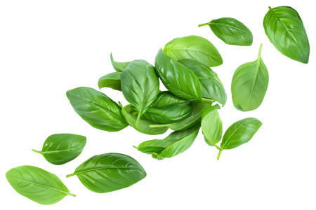 Fresh basil leaf isolated on white background. Top view. Flat lay