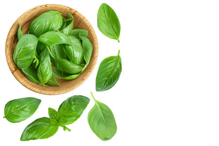 Fresh basil leaf in wooden bowl isolated on white background . Top view with copy space for your text. Flat lay Standard-Bild