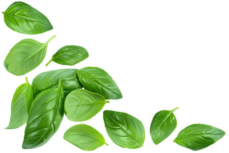 Fresh basil leaf isolated on white background. Top view with copy space for your text. Flat lay Standard-Bild