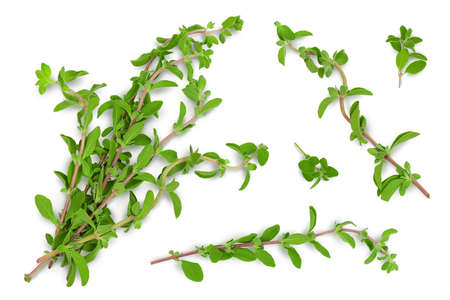 Oregano or marjoram leaves isolated on white background with clipping path and full depth of field. Top view. Flat lay Reklamní fotografie