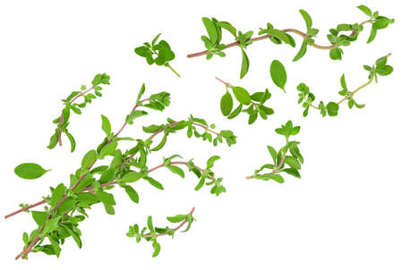 Oregano or marjoram leaves isolated on white background and full depth of field. Top view. Flat lay Stockfoto
