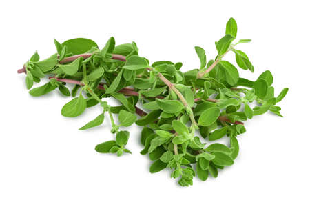 Oregano or marjoram leaves isolated on white background with and full depth of field Banque d'images