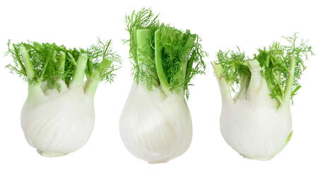 fresh fennel bulb isolated on white background with  and full depth of field. Top view. Flat lay