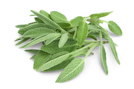 fresh sage herb isolated on white background with and full depth of field