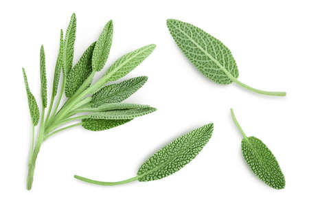 fresh sage herb isolated on white background with   and full depth of field, Top view. Flat lay
