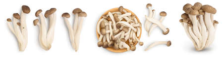 Brown beech mushrooms or Shimeji mushroom isolated on white background. Set or collection Banque d'images
