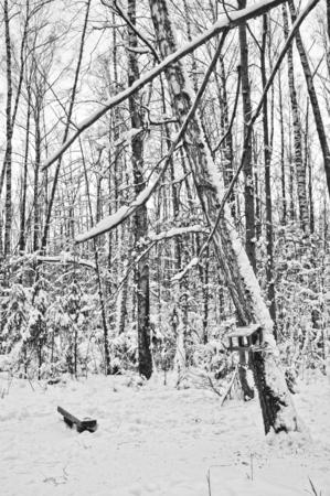 zimÄ… krajobraz