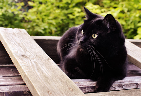 Black cat sitting on a wooden desk in the garden