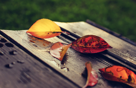 Autumn leaves on a wooden table Zdjęcie Seryjne