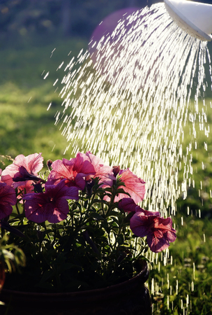 watering in the garden