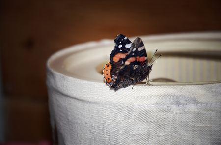Butterfly sitting on the lamp