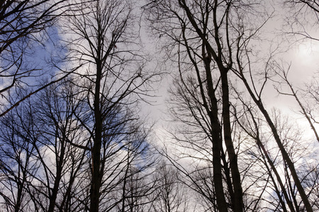 Trees on blue sky background