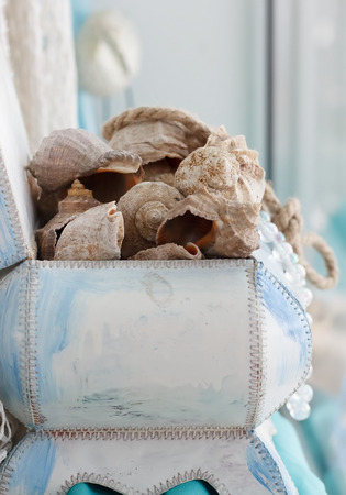 sea shells in the interior decoration, shallow depth of field