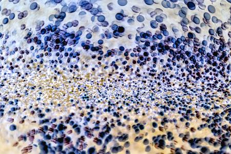 顕微鏡の背景の下の細菌 写真素材