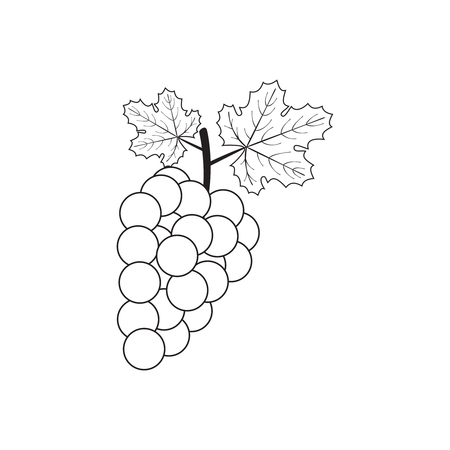 Vector illustration of outline grape.