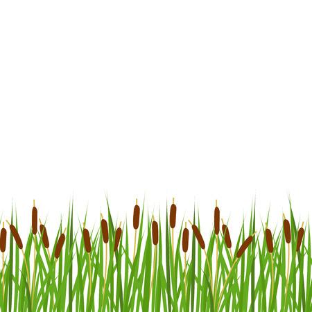Vector reeds border. Reeds horizontal border.