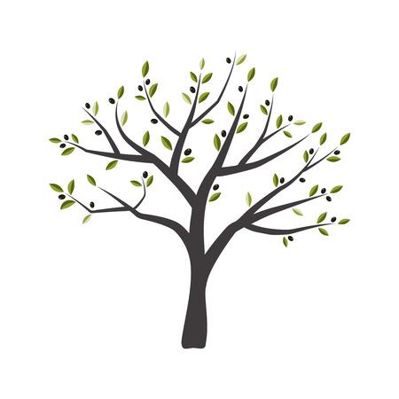Vector illustration of olive tree. Green olive tree.