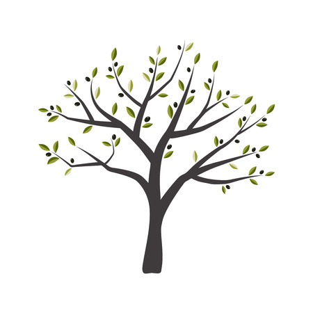 Vector illustration of olive tree. Green olive tree.