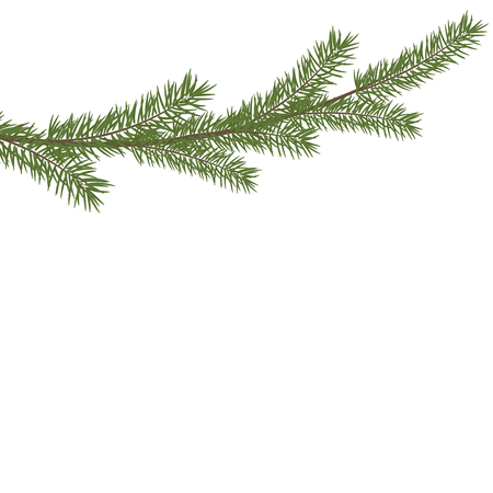 Christmas tree branche in the corner. Green fir tree branch. Realistic vector Christmas pine tree branch.
