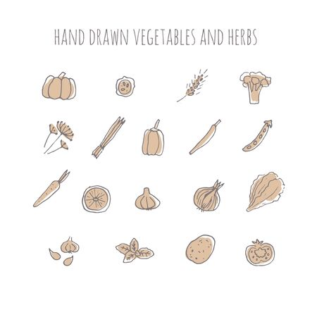 Vector hand drawn vegetables and herbs. Hand drawn icons.