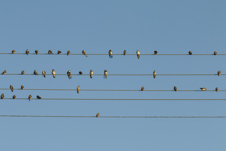 Birds on a wire - Stock Image  photo