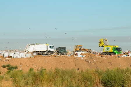 scavenging: Rostov - on - Don, Russia - August 26, 2015: Birds over the Heap of garbage in dump, established in Rostov - on - Don. Editorial