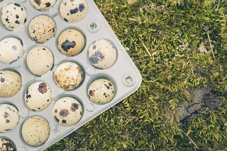Oeufs de caille dans un récipient en plastique transparent sur la mousse verte dans la forêt de printemps. Concept d'aliments sains naturels. Banque d'images - 85542286