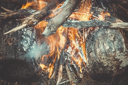 Bonfire in the forest. Burning campfire logs. Banque d'images
