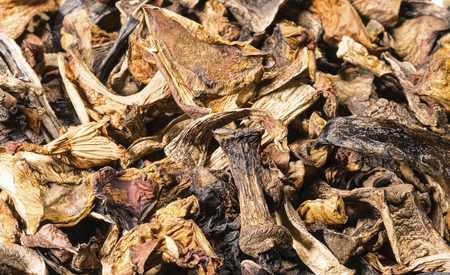 Background of dried mushroom. Natural healthy food concept. Macro shot.